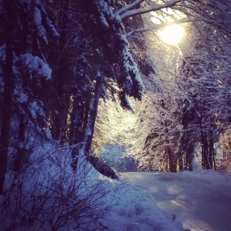 Ice Storm Dog Pond Road